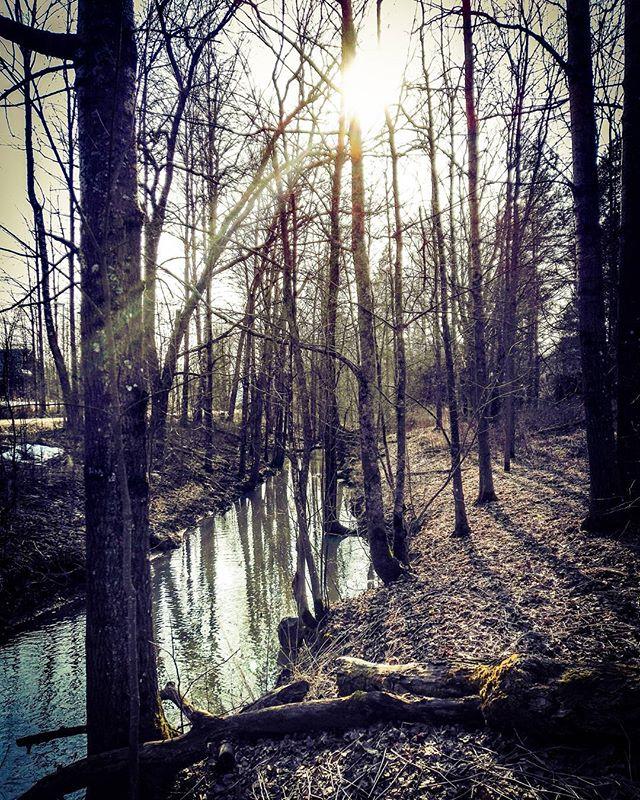 longinoja-kevat-kevataurinko-spring-woods-sun-sunshine-forest-malmi-alamalmi