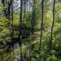longinoja-malmi-alamalmi-river-forest-green-trees-nature-naturelovers-spring