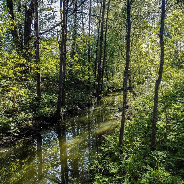 longinoja-malmi-alamalmi-river-forest-green-trees-nature-naturelovers-spring