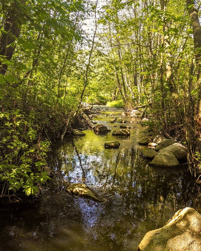 longinoja-river-naturephotography-nature-naturelover-spring-malmi-alamalmi-helsinki-finland