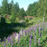longinoja-kesa-kukkia