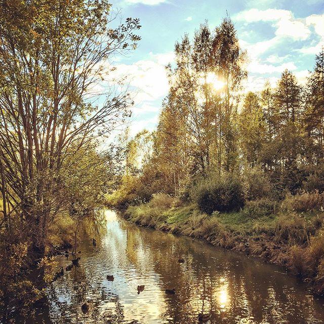 longinoja-autumn-syksy-sunnyday-river-goout-enjoylife-enjoynature-naturelovers-naturephotography-lan