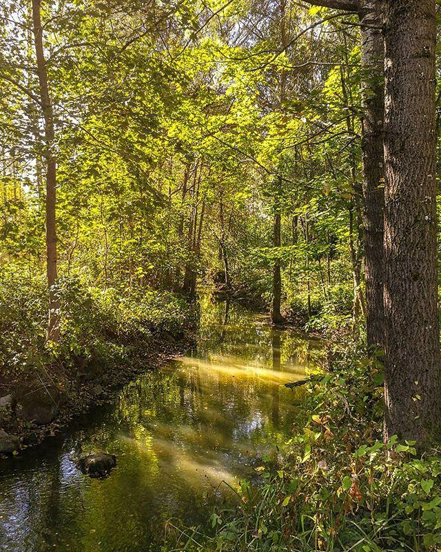longinoja-river-urbannature-urbannaturelovers-forest-alamalmi-malmi-helsinki-honor8-huaweisuomi