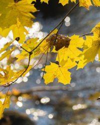 longinoja-suomenluonto-luontokuva-autumn-syksy-fall-helsinki-nature-naturephoto-naturephotos-naturep-2