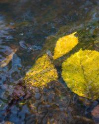 longinoja-suomenluonto-luontokuva-autumn-syksy-fall-helsinki-nature-naturephoto-naturephotos-naturep-4