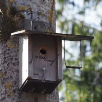 Bird house with all the comforts
