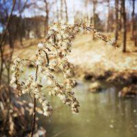 Longinojan kevät-kuosi on vielä ruskea. Vihreää odotellessa.