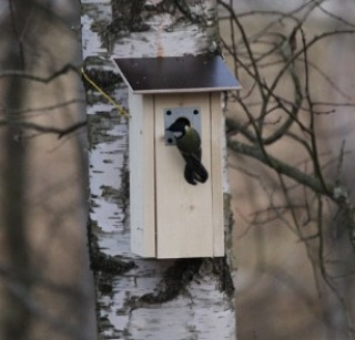 Pönttö ehti olla puussa 5 min ja heti oli ensimmäinen asunnonhakija jonossa. Varsinainen avara luonto meidän ikkunasta