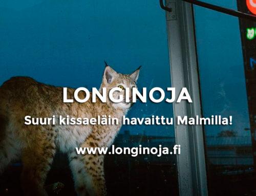 Suuri kissaeläin havaittu Malmilla!