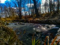 longinoja-kevat-spring-creek-river-stream-urbannaturelovers-urbannature-malmi-alamalmi-honor8-honorf-2