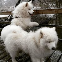 Polarbears at Longinoja creek . Yes, it is snowing in Helsinki and it is almost May . But we love it!!!  - Taavi & Paavo