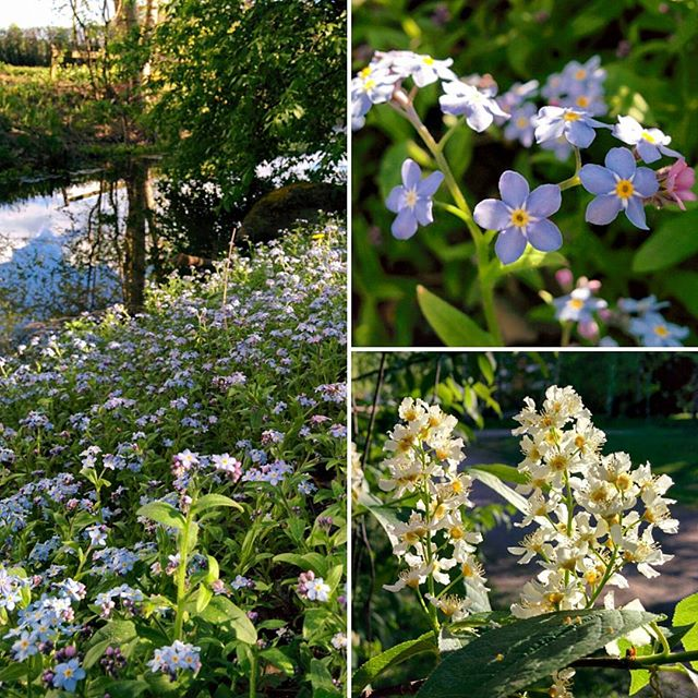 Keväistä kukkailottelua Longinojalla.