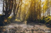 river-longinoja-malmi-helsinki-finland-fog-magical-skmphoto-landscape-landscapelovers-forest-canon6d