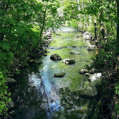 longinoja-alamalmi-helsinki-nature-summer