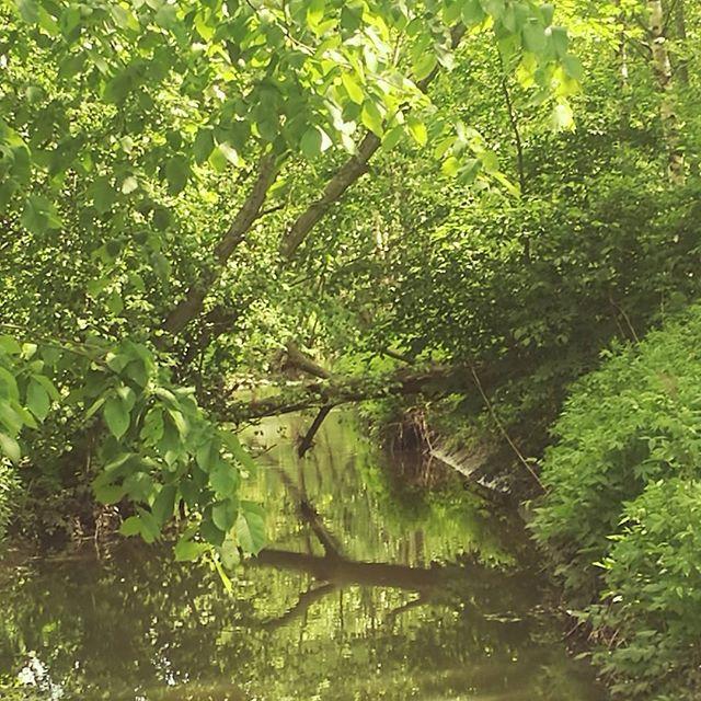longinoja-urbannaturelovers-creek-urbannature-river-alamalmi-malmi-honorfoto-honorphoto-honor8-huawe-1