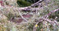 klaara-myrsky-longinoja-t