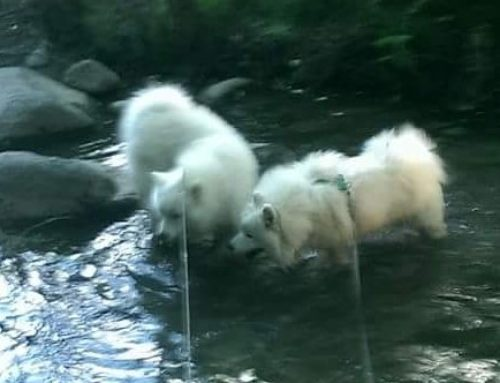 Water on a hot day ! Who can resist? – Taavi & Paavo