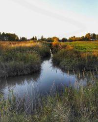 The colours of nature are changing... Malmi, kesäinen alkuilta syyskuun lopulla