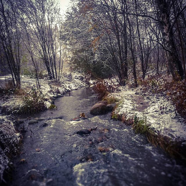 ensilumi-firstsnow-longinoja-autumnleaves-autumn-longinojasyksy-river-creek-urbannaturelovers-urbann-7