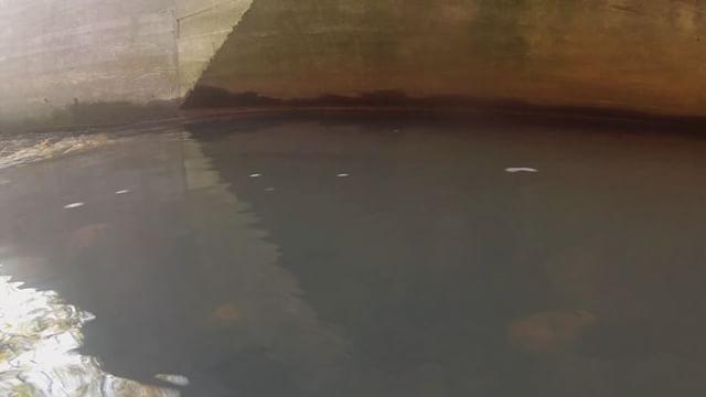 Helsinkiin piti tulla, että pääsi seuraamaan tätä romantiikkaa. Harmi, että samea vesi ja näkyvyys ei ole juuri yli 10 cm. Sama mikä meilläpäin monessa vesistössä, paitsi että vesi täällä ei ole ruskeeta....mutta onneksi pääs 10 senttii lähemmäksikin rakastavaisia, niin jopa laji on tunnistettavissa.