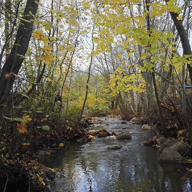 Käytiin katsomassa taimenten kutua Longinojalla. Enimmäkseen sai tuijotella pelkkää puromaisemaa, mutta löytyi niitä fisujakin lopulta viimeisen sillan alta, johon kurkattiin.