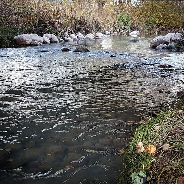 Little spawning action observering at urban sea trout creek . Should have stayed longer until darkening, trouts seemend really spooky after bright day.