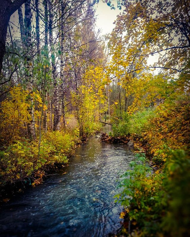 longinoja-autumnleaves-autumn-longinojansyksy-river-creek-urbannaturelovers-urbannature-stream-malmi-1