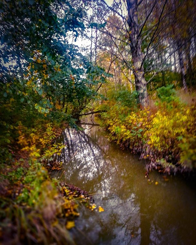 longinoja-autumnleaves-autumn-longinojansyksy-river-creek-urbannaturelovers-urbannature-stream-malmi-2