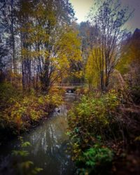 longinoja-autumnleaves-autumn-longinojasyksy-river-creek-urbannaturelovers-urbannature-stream-malmi-
