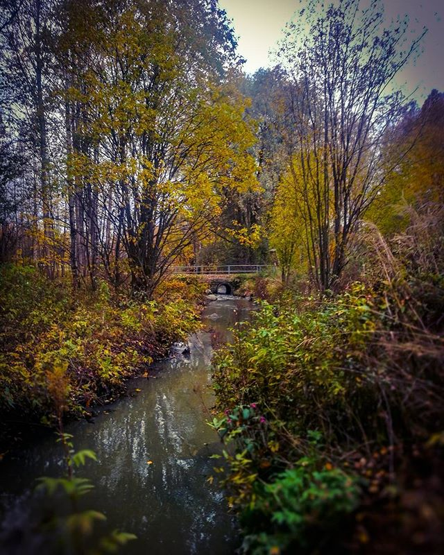 longinoja-autumnleaves-autumn-longinojasyksy-river-creek-urbannaturelovers-urbannature-stream-malmi-