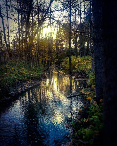 longinoja-autumnleaves-autumn-longinojasyksy-river-creek-urbannaturelovers-urbannature-stream-malmi-1-2