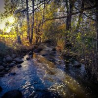 longinoja-autumnleaves-autumn-longinojasyksy-river-creek-urbannaturelovers-urbannature-stream-malmi-1-5