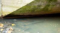longinoja-kuteminenkuuluukaikille-mittakala