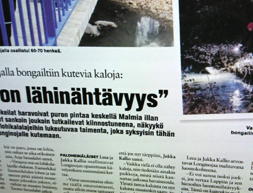 Koillis-Helsingin Lähitieto: Malmin Longinojalla bongailtiin kutevia kaloja: Tämä on lähinähtävyys