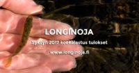 longinoja-syksy-2017-koekalastus-t