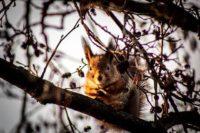 squirrel-orava-longinoja-longinojasyksy-helsinki-suomenluonto-valokuvaus-nature-finland-photoshoot-c