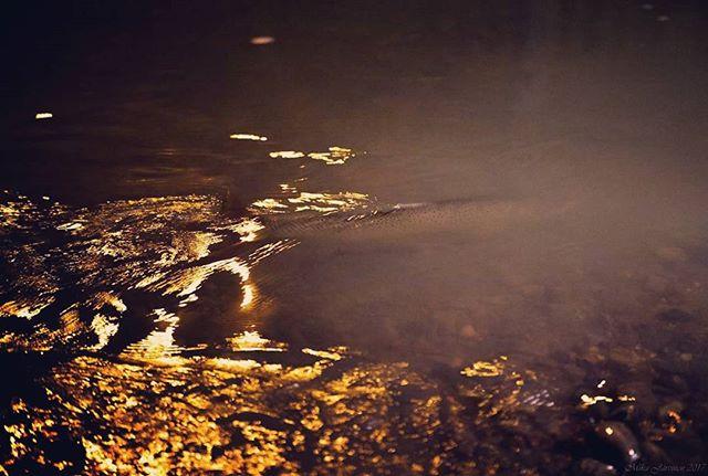 Taimen Helsingin purossa Longinoja.