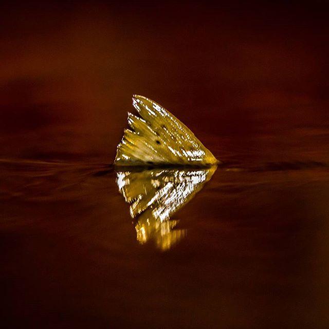 taimen-meritaimen-trout-browntrout-seatrout-longinoja-vantaanjoki-river-helsinki-finland-visitfinlan-2