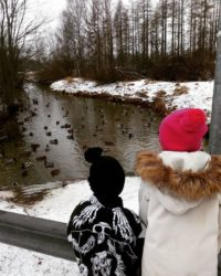 mykids-winter-january-finland-helsinki-malmi-alamalmi-longinoja-sorsia-duck-ducks-mallard-mallards-m