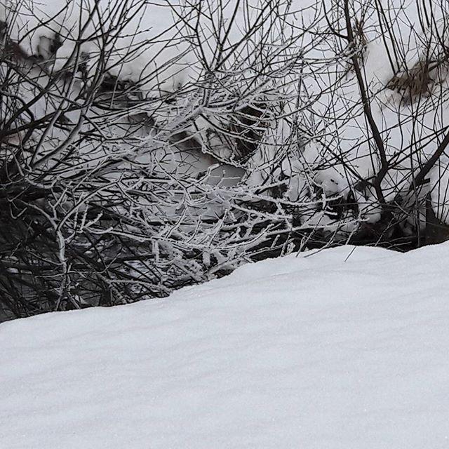 frozen-longinojatalvella-longinoja-winter-talvi-luntatulvillaan-snow-sno-jaassa-kuuraa