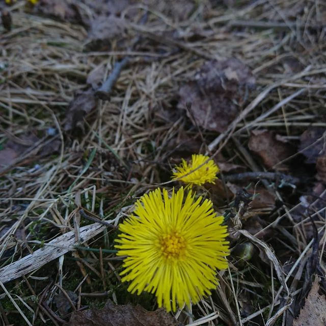 Kevät! Luonto herää. Talvi on selätetty, on uudelleen syntymisen aika.