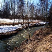 Meidän lähitienoon puro Longinoja virtaa taas kevään ääniä. Piisami uiskenteli vaan enpä minä sitä kuvaan saanut. Muutamat sinisorsatkin uinuivat ilman huolen häivää.