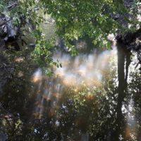heijastus-puro-pienvesi-vaelluskalat-helsinki-malmi-longinoja-kesapaiva