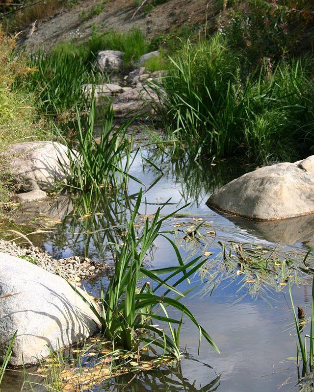 KESY-teema: VESI Vesioloihin liittyvät toimintaperiaatteet kannustavat turvaamaan paikan vesiekosysteemipalvelut. Ne ohjaavat rakentamisen sijoittamista siten, että esim. tulva-alueiden ekologiset toiminnot ja herkkien vesiekosysteemien toiminta turvataan. Ne ohjeistavat myös vesiekosysteemien kunnostusta ja hulevesien hallintaa. Lisäksi tavoitteeksi on asetettu talousveden kulutuksen vähentäminen. Lue lisää  ks. linkki biossa.  Hanna Tajakka.
