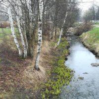 kevat-kaupunkiluonto-longinoja-springtime-citynature