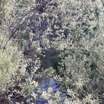 longinoja-kevat-melkeenkesa-vihertaa-longinojakevat