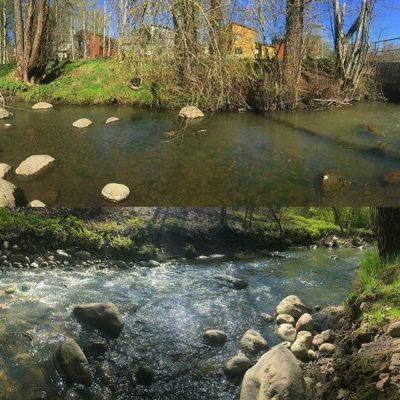 Tältä näyttää Longinoja, eli yksi Suomen parhaiten onnistuneista purokunnostuskohteista juuri nyt. Vuodessa tämä helsinkiläinen puro, Vantaanjoen alin sivuhaara tuottaa vain muutamien kilometrien matkalla useamman tuhannen taimenen luonnonsmolttia. Joka syksy puroon palaa kudulle lähemmäksi sata merivaelluksen tehnyttä taimenta. Toistaiseksi pisimmät kututaimenet ovat olleet noin 80 senttisiä. Tämän puron asioista voi ja kannattaakin monella tavalla ottaa oppia. Lisätietoa os. www.longinoja.fi = Suomen tunnetuin taimenpuro Ja jos haluaa osallistua Longinoja-opastukseen, ja kuulla kohteesta tarkemmin, niin se onnistuu 15. toukokuuta 2018 klo 17:00–20:00 @longinoja