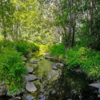 longinoja-longinojankesa-joki-puro-creek-stream-urbannature-urbannaturelovers-reflection-alamalmi-ma