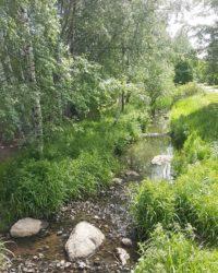 longinoja-parhaimmillaan-vehreaa-green-nature-smallnaturalbrook