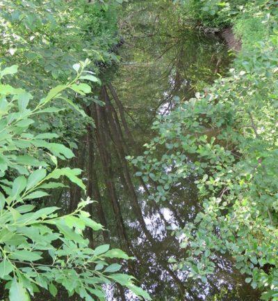 longinoja-viidakko